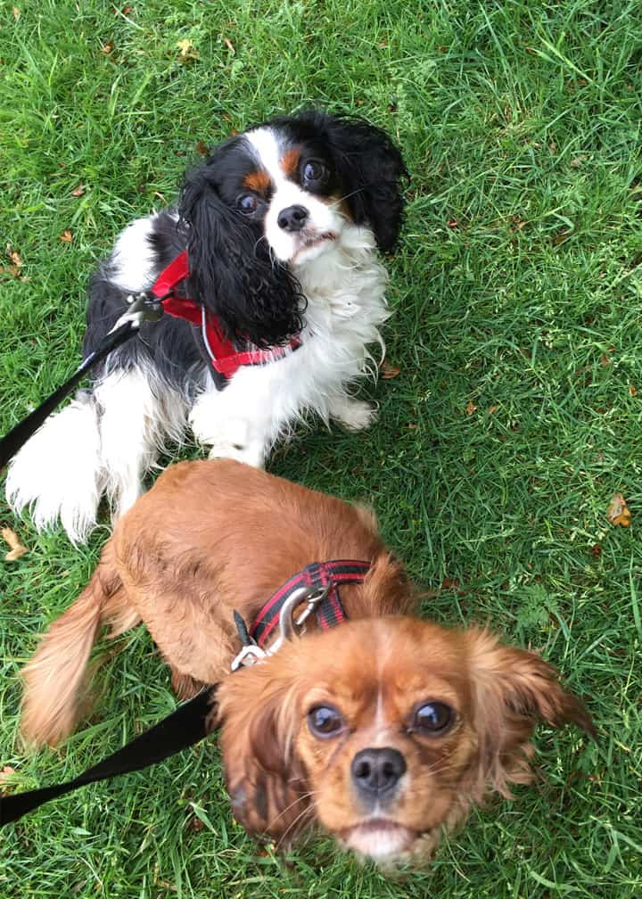 local dog walker service peppers pals