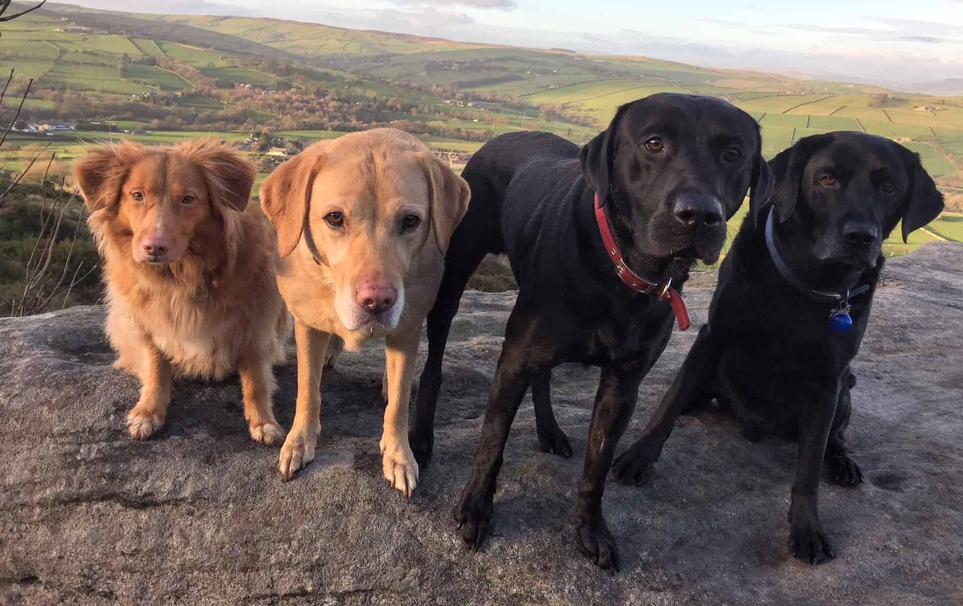 peppers pals dog walking and boarding service skipton